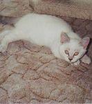 Penelope von der Dierheide