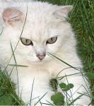 Tomcat von der Dierheide